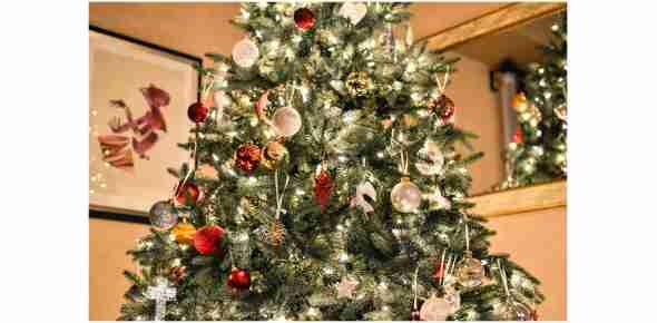 Živé vánoční stromky online