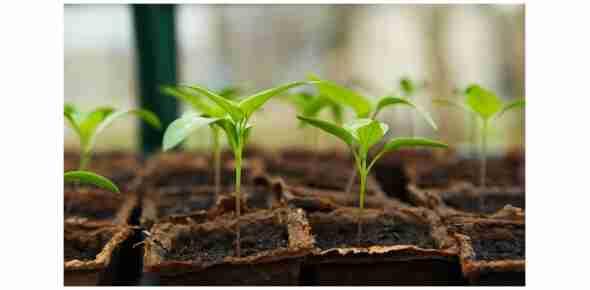 Indoor pěstování